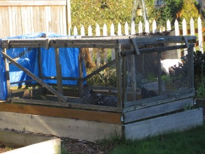 The old chicken tractor, a little worse for wear.