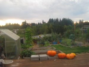 September 2015 at the Toy Box Sub-Urban Farm.