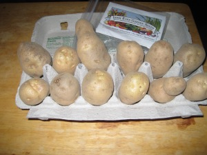 February 10, 2016 Potatoes