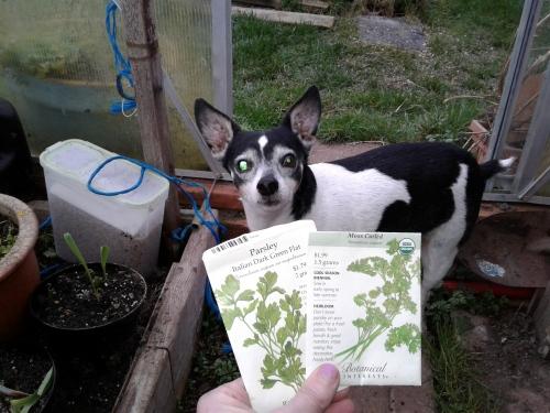 February 13 parsley