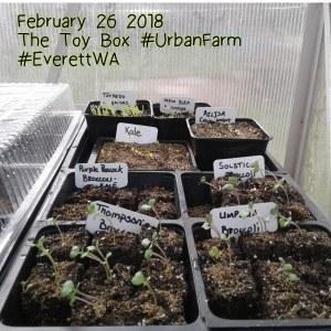 Greenhouse February 26, 2018