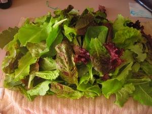 June 10, 2015 (4) Lettuce