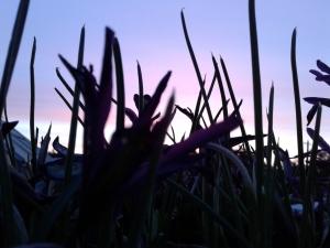 Sunrise February 21, 2018