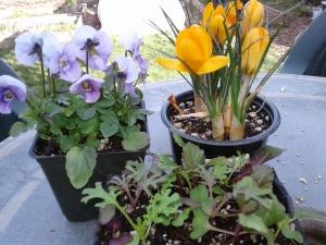 Lettuce 3 March 1